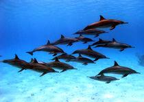 Into the blue von Gesellschaft zur Rettung der Delphine e.V.